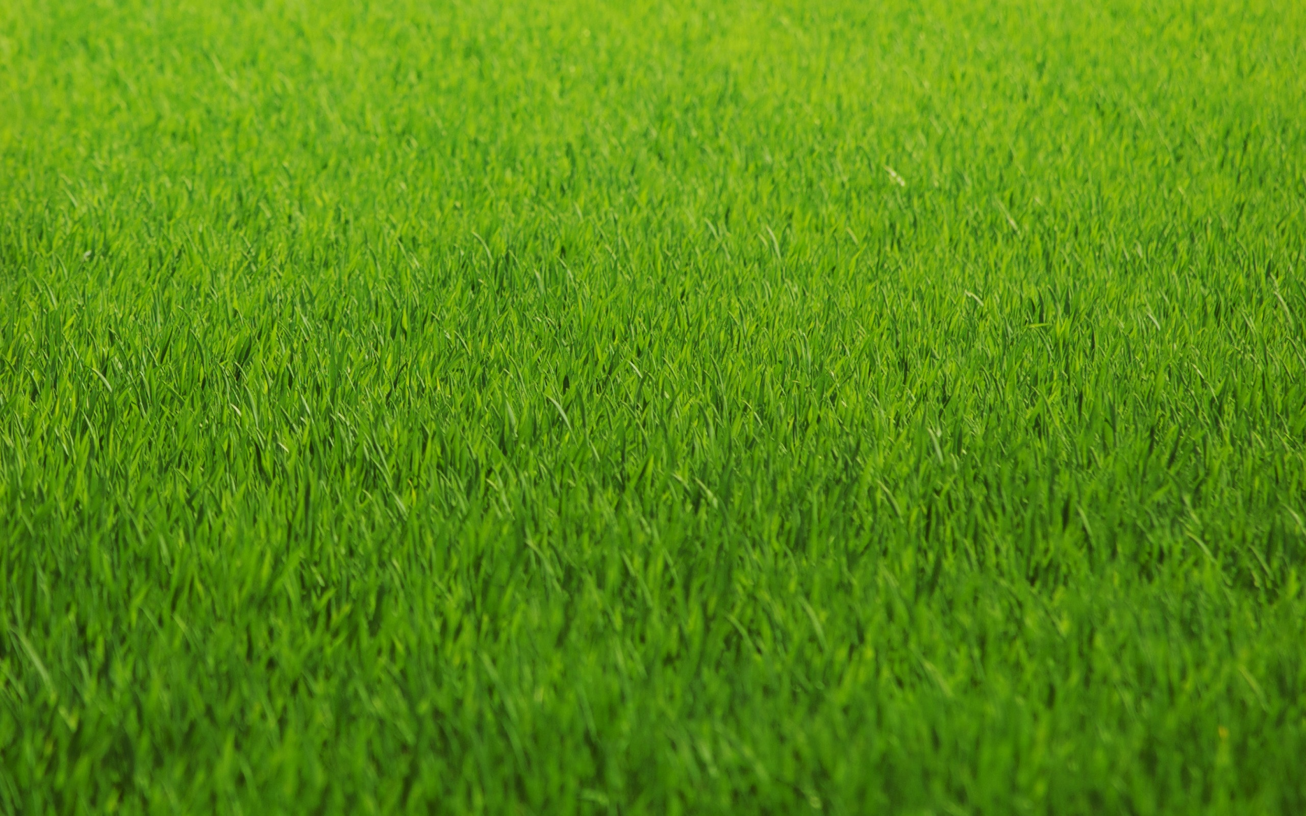 fields and grass - photo #29