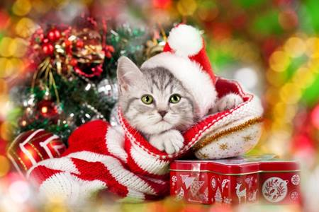 Cat Christmas.Christmas Cat Ramblings Of An Asparagus